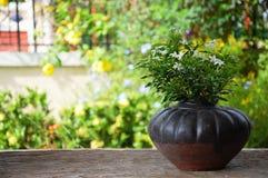 Flores en el pote y el jardín Fotografía de archivo