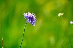 Flores en el prado Imagenes de archivo