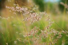 Flores en el prado Imagen de archivo