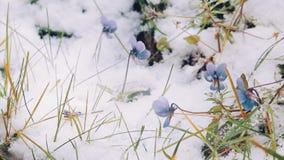 Flores en el snowv almacen de metraje de vídeo