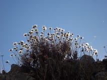 Flores en el sol Foto de archivo libre de regalías