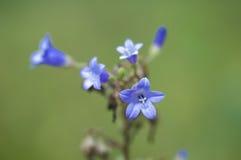 Flores en el sol Fotos de archivo libres de regalías