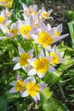 Flores en el sol Fotos de archivo