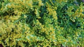 Flores en el vector metrajes
