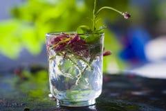 Flores en el vidrio Fotos de archivo libres de regalías