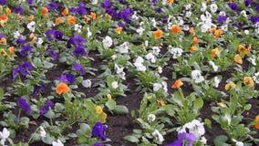 Flores en el viento almacen de metraje de vídeo