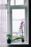 Flores en el windowsill Imagenes de archivo