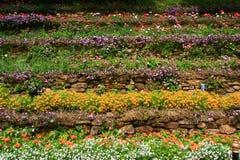 Flores en escalera Fotografía de archivo libre de regalías
