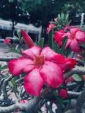 Flores en escuela fotos de archivo libres de regalías