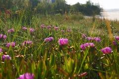 Flores en Espa?a fotografía de archivo