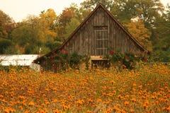 Flores en esta casa rústica en rzburg del ¼ de WÃ Imagenes de archivo