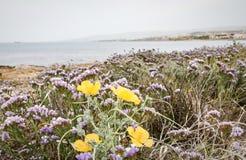 Flores en flor por el mar Foto de archivo libre de regalías