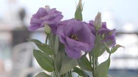 Flores en florero almacen de metraje de vídeo