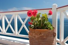 Flores en florero en balcón del verano Foto de archivo libre de regalías