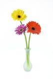 Flores en florero en el fondo blanco Imágenes de archivo libres de regalías