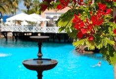 Flores (en foco) en la piscina Imagen de archivo