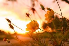 Flores en fondo de la luz del sol de la mañana Fotos de archivo