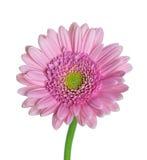 Flores en fondo del whitr Fotografía de archivo