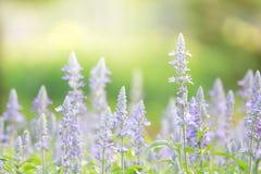 Flores en fondo hermoso de la falta de definición del campo Fotos de archivo libres de regalías