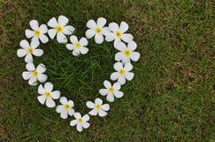 Flores en forma de corazón blancas del Lan Thom. Foto de archivo