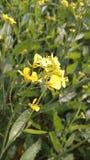Flores en grasiento en fotos de archivo libres de regalías