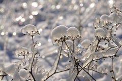 Flores en hielo Imagen de archivo