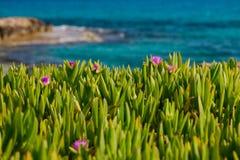 Flores en hierba cerca del mar Fotos de archivo