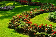 Flores en hierba verde Foto de archivo