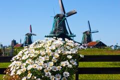 Flores en Holanda Imagenes de archivo