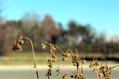 Flores en invierno Fotografía de archivo