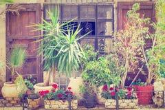 Flores en Jaffa Fotografía de archivo