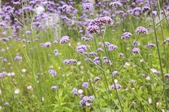 Flores en jardín Imagen de archivo libre de regalías