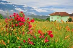 Flores en jardín Imagen de archivo