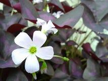 Flores en jardín Fotos de archivo