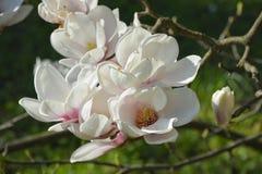 Flores en jardín Imagenes de archivo