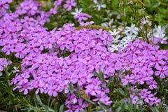 Flores en jardín Fotos de archivo libres de regalías