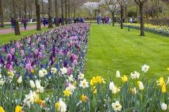Flores en Keukenhof, Países Bajos Fotos de archivo