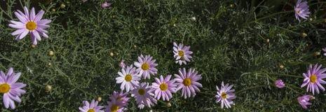 Flores en la bandera del césped imagen de archivo
