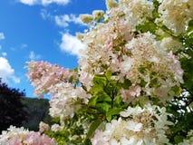 Flores en la caída Imagen de archivo