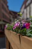 Flores en la calle de Tallinn Fotos de archivo libres de regalías