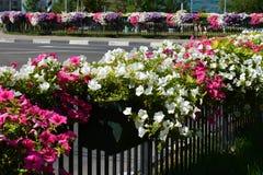 Flores en la ciudad Foto de archivo libre de regalías