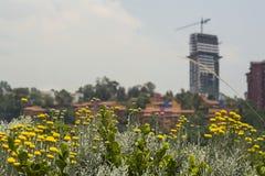 Flores en la ciudad Imagen de archivo libre de regalías