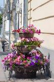 Flores en la ciudad Imagenes de archivo