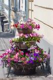 Flores en la ciudad Fotos de archivo