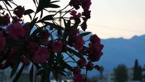 Flores en la ciudad de la montaña en la puesta del sol Turqu?a almacen de metraje de vídeo