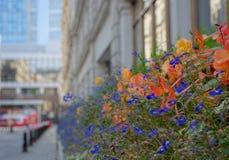 Flores en la ciudad fotografía de archivo