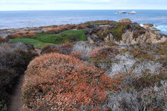 flores en la Costa del Pacífico Fotos de archivo