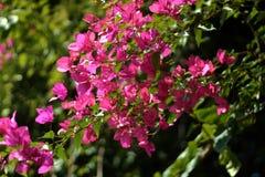Flores en la demostración de la horticultura fotografía de archivo