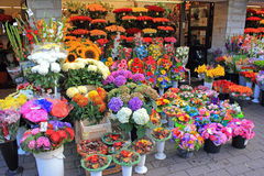 Flores en la exhibición en la floristería Imagen de archivo