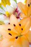 Flores en la floración Foto de archivo libre de regalías